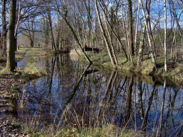 Vue sur le sentier bordant l'étang